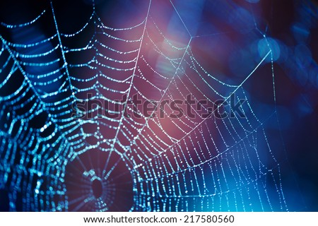 Spider web Royalty-Free Stock Photo #217580560
