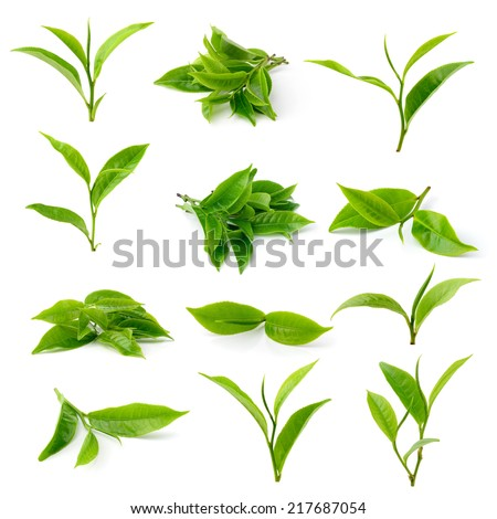 green tea leaf isolated on white background #217687054