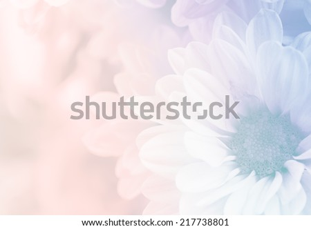 Chrysanthemum in soft style and blurred for background #217738801
