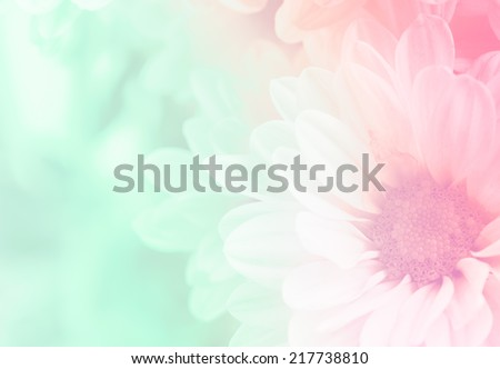 Chrysanthemum in soft style and blurred for background #217738810