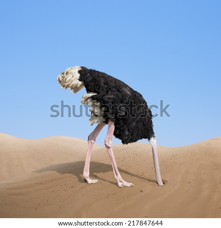 scared ostrich burying its head in sand concept Royalty-Free Stock Photo #217847644