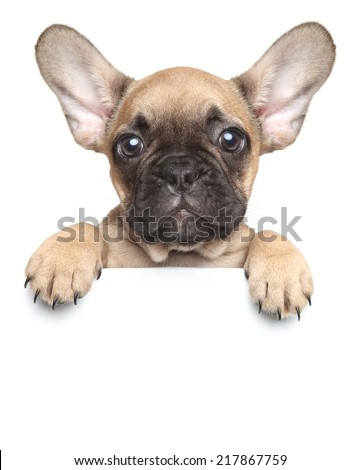 Funny French Bulldog puppy over a white banner, isolated #217867759