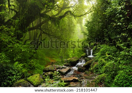 Subtropical forest in nepal Royalty-Free Stock Photo #218101447