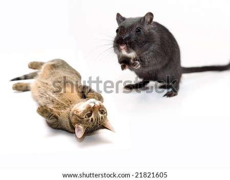 Cat hunts on a mouse #21821605