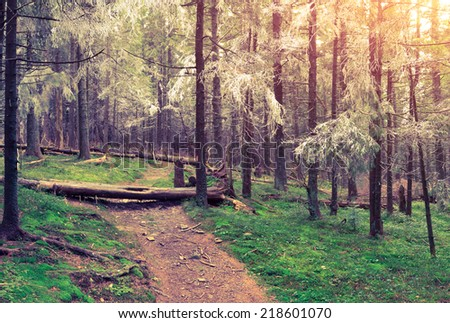 First frost in the autumn forest. Retro style. Royalty-Free Stock Photo #218601070