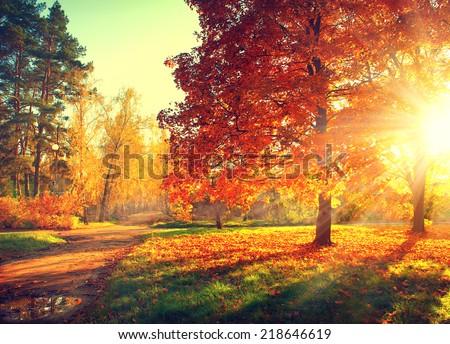 Autumn. Fall. Autumnal Park. Autumn Trees and Leaves in sun light. Autumn scene