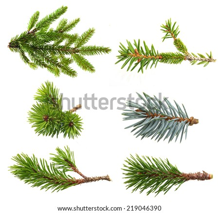 Fir tree branch set  isolated on white. #219046390
