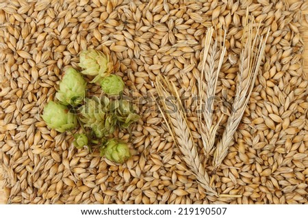 Grains and ears of barley with hops #219190507