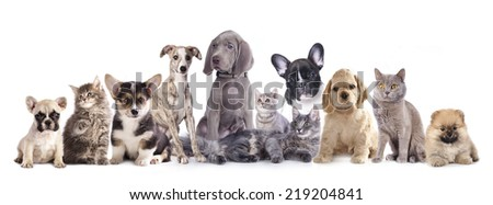 Cats and dogs. #219204841