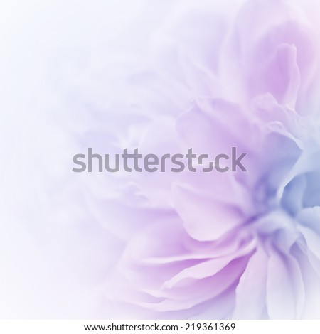sweet color roses in soft color and blur style for background