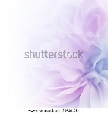 sweet color roses in soft color and blur style for background #219361384