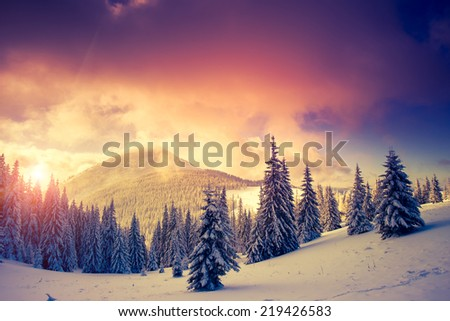 Fantastic evening landscape in a colorful sunlight. Dramatic wintry scene. National Park Carpathian, Ukraine, Europe. Beauty world. Retro style filter. Instagram toning effect. Happy New Year! #219426583