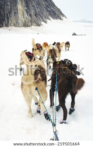 Sled dogs mushing and running through snow plains between mounta #219501664