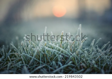 green grass with morning frost and red sun Royalty-Free Stock Photo #219843502
