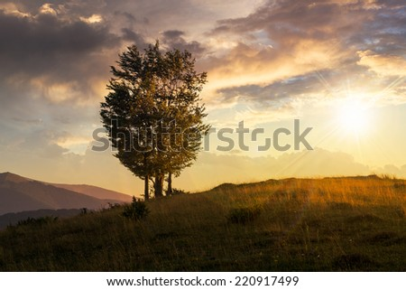 mountain summer landscape. few trees on hillside meadow at sunset #220917499