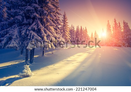 Fantastic evening landscape in a colorful sunlight. Dramatic wintry scene. National Park Carpathian, Ukraine, Europe. Beauty world. Retro style filter. Instagram toning effect. Happy New Year! Royalty-Free Stock Photo #221247004
