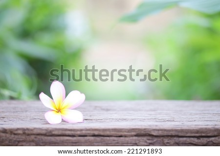 Frangipani flower on wooden table