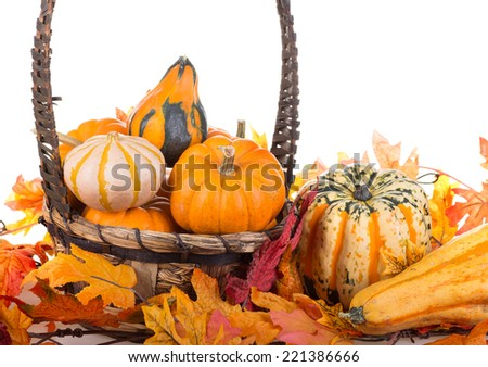 Assortment of gourds and squash with a basket and autumn leaves on a white background #221386666
