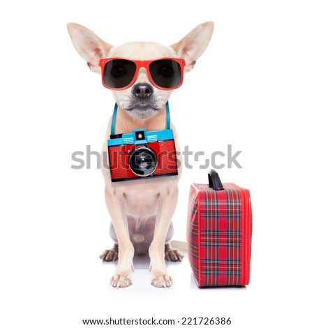 chihuahua dog with photo camera ready for  summer vacation , isolated on white background