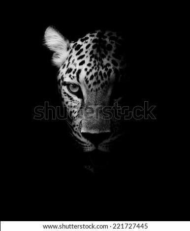 Leopard portrait #221727445