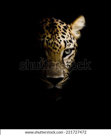 Leopard portrait #221727472