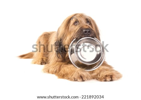 Briard holding a stainless bowl #221892034