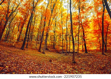Autumn forest. Beautiful nature background. #221907235