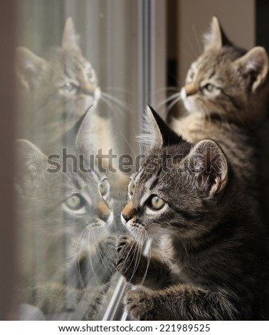 Two tabby kittens are reflected to play in a window pane.