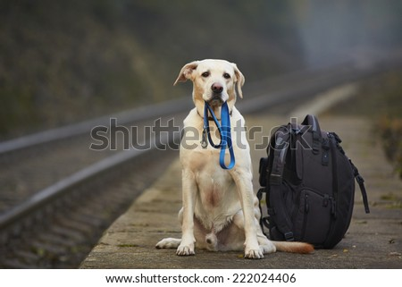 Dog is waiting for the owner on the railway platform  #222024406