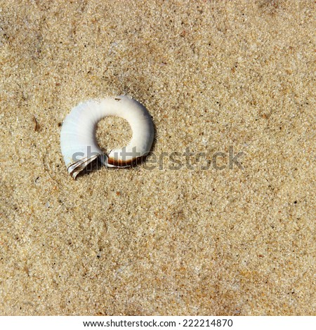 sand background and shell #222214870