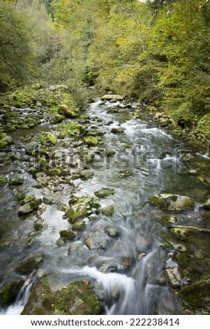 Torrent, river running through the forrest, Switzerland #222238414
