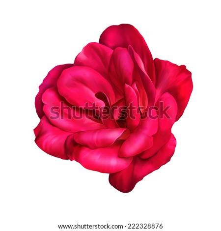 Beautiful rose flower. Macro closeup. #222328876