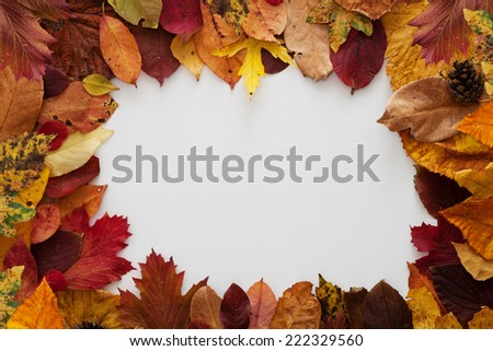 picture frame in autumn style