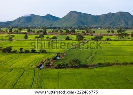 Rice Field in thailand green background  #222486775