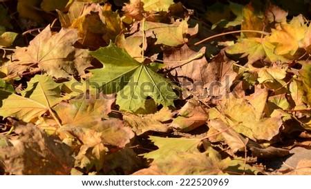 Autumn #222520969