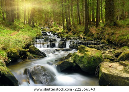 Mountain stream in green forest at spring time  #222556543