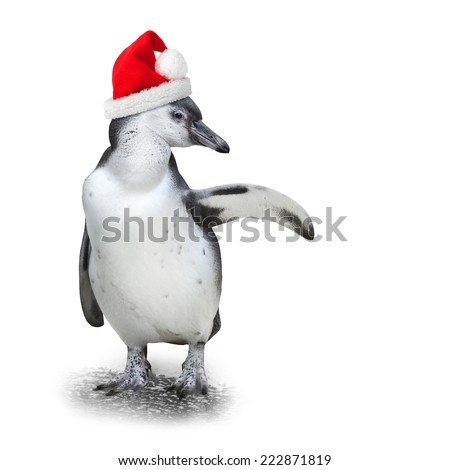 Funny penguin with santa's cap showing space for your text.