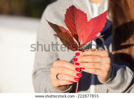 Red autumn leaf in woman hands