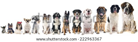 group of dogs  in front of white background #222963367