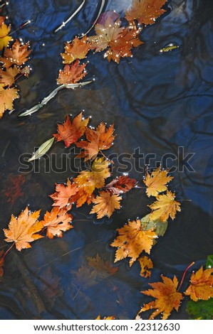 dry fallen maple leaves on the stream surface #22312630