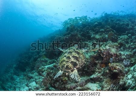 Sea turtle #223156072