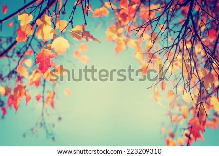 Colorful foliage in the autumn park/ Autumn leaves sky background/ Autumn Trees Leaves in vintage color #223209310