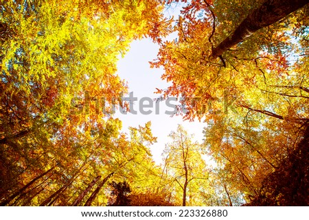 Forest in autumn. Beautiful nature background. #223326880