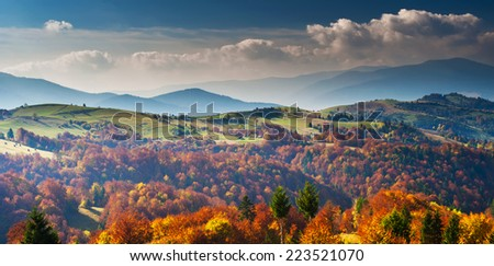 Tree with yellow leaves in the mountains #223521070