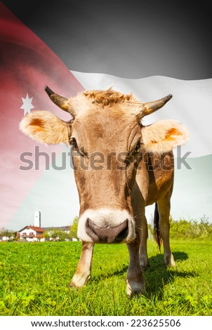 Cow with flag on background series - Jordan #223625506