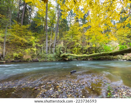 autumnal forest with wild river #223736593