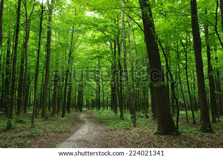 Path in the green forest #224021341