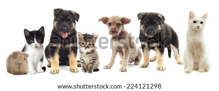 set pets #224121298
