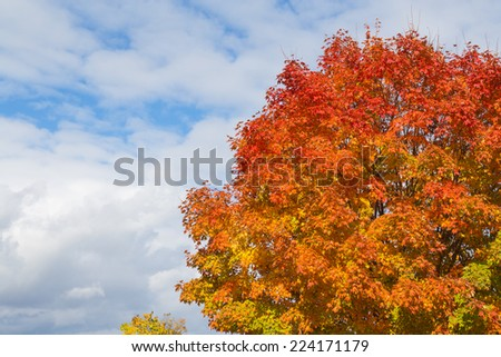 A tree showing colourful leaves in the fall with copy space #224171179