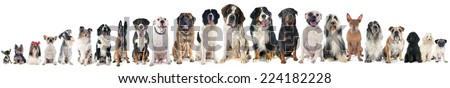 group of dogs of white background #224182228